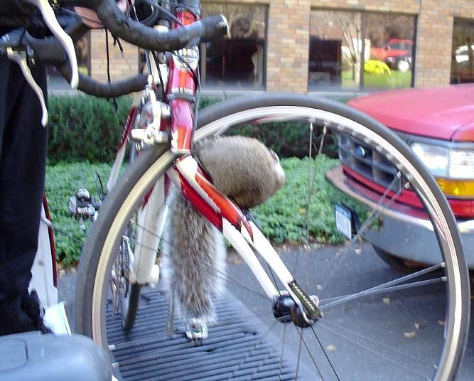 Bicycle Failures An Addendum To Pardo Net